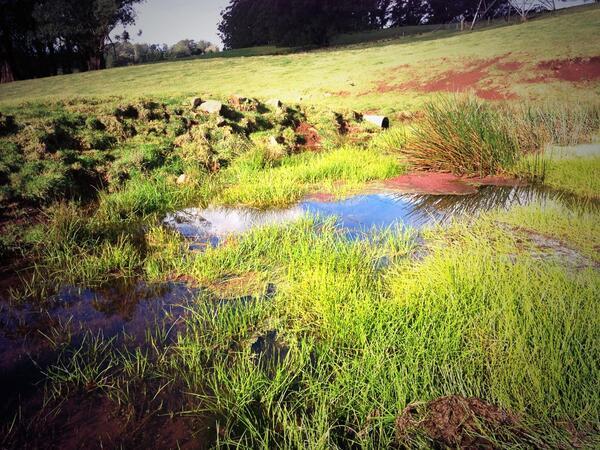 Pond. #tweetedfarmwalk @zoerose22 http://t.co/VBAt4yieGK