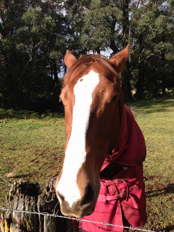 Horse. #tweetedfarmwalk @zoerose22 http://t.co/NoNlVyM3Su