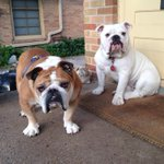 "RT @DUPorterhouse: GOOD MORNING! This is my ""chipper"" face. http://t.co/tSf0sE9J3C"