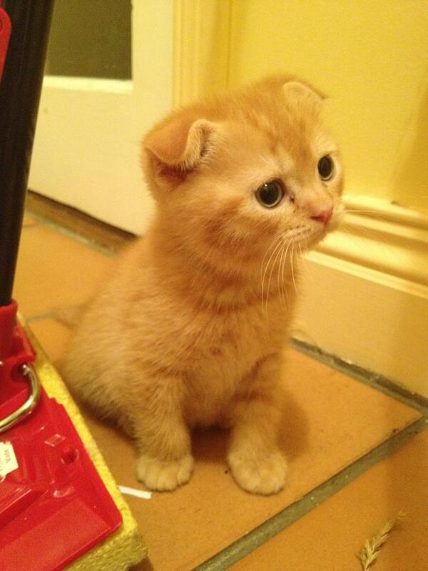 Confused kitten, sitting next to a mop. http://t.co/tjGbchira3