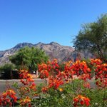 I love the beauty of #Tucson summers! Bright blooms at Ventana Plaza -Kolb/Territory looking north to the #Catalinas http://t.co/zTmxt1DpEc