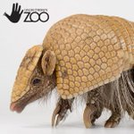 MT @lincolnzoo: Were open til 8 pm tonight. See Fez, the three banded armadillo! #LNK http://t.co/ns5WruXYEz @LincolnCVB
