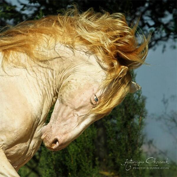 """""""En el pisar se conoce al caballo y al caballero al gobernarlo """" http://t.co/lJ4dcg34cZ"""