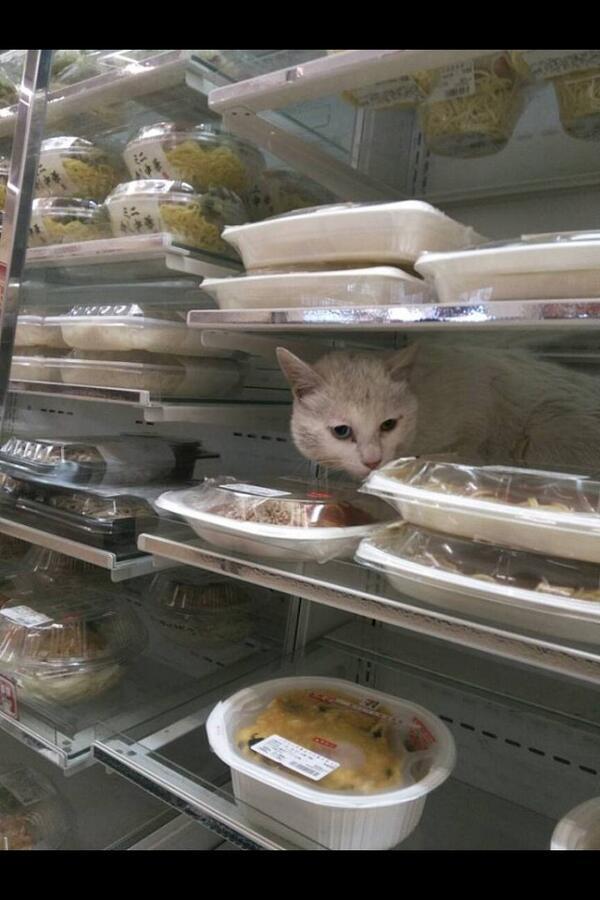 【悲報】あずきバー販売中止!マックスバリュ大在店がアイスケース問題で謝罪