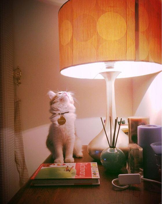 Super Kitteh Koopa seems a bit mesmerized by the Mad Men retro lamp, eh? http://t.co/wwS8WWZik0