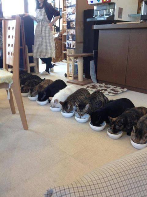整列 お行儀よく食べなさい http://t.co/eB3E5uhie9