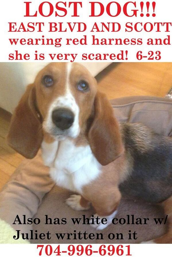 Please share and let's find this little pup! #LOSTDOG #DILWORTH #CLT http://t.co/YcUrNOrPmL RT @discoveryplace @MaureenOBoyle