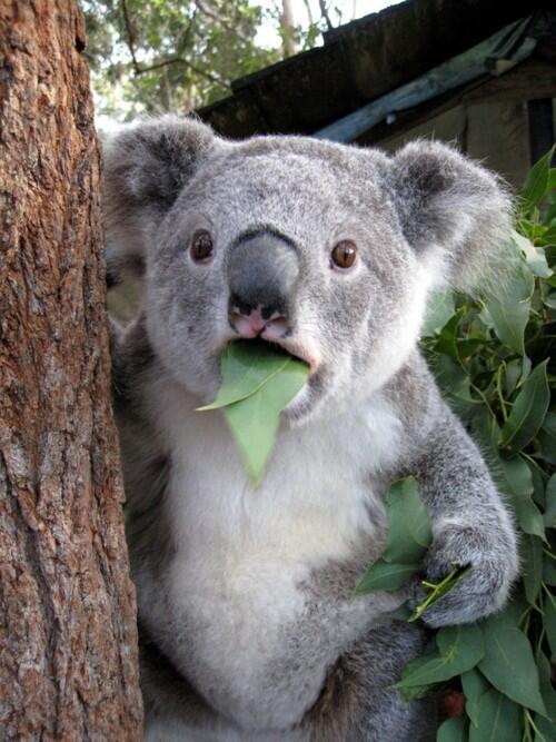 ラバスト予約分も再入荷分も売り切れだと知らされたときの私の顔 http://t.co/1OyVEoD56z
