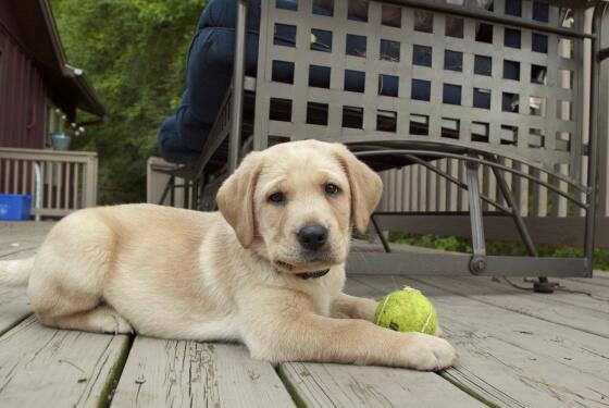 #Wimbledon can't start today.  I've got their ball. http://t.co/ja238GvSqb