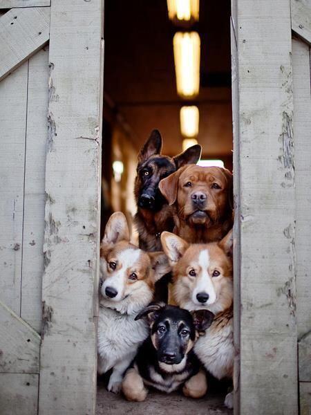 犬の館へようこそ http://t.co/BM7k9TwLfR