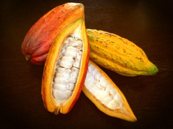 Fresh cocoa pods http://t.co/YWZeU3Qq5D