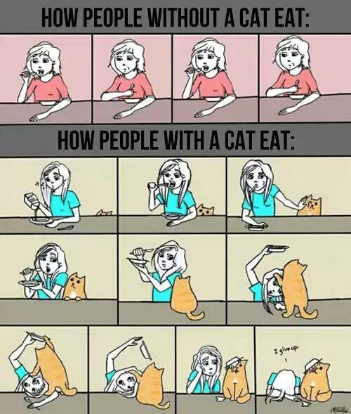 How cat owners eat http://t.co/4knIU0Wett