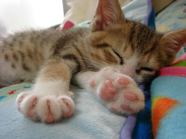 【 可愛かったらRT♪ 】    おやすみなさい。。。zzZZ http://t.co/QvQxbdPf4j