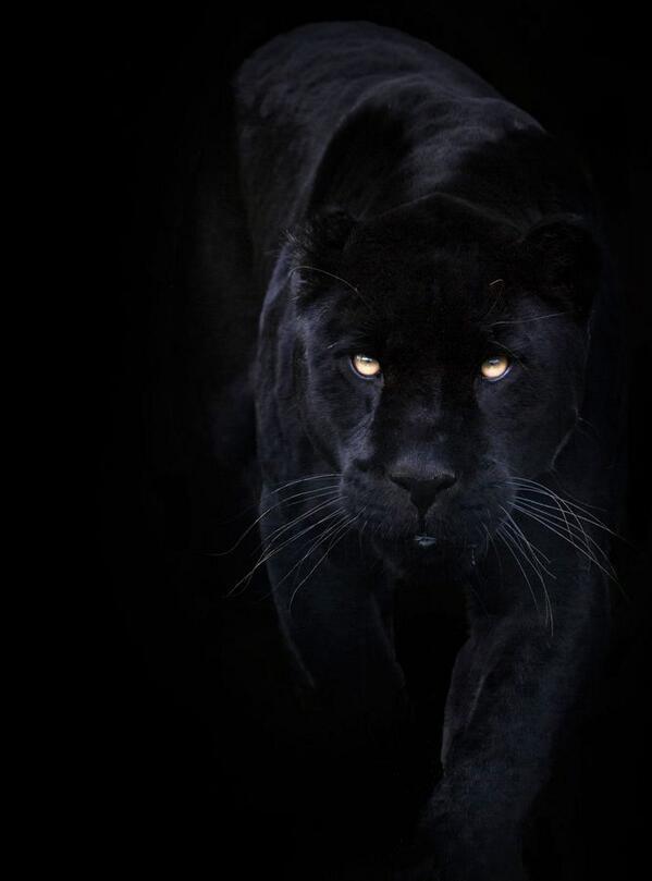 Black on Black http://t.co/0omrlPtCGR