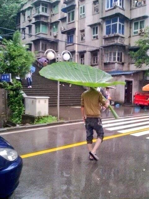 リアルなトトロ傘発見したよ。 すご?い(⌒▽⌒)