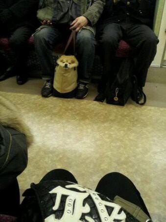 test ツイッターメディア - 電車で犬がいたw https://t.co/kP8mXMomjZ