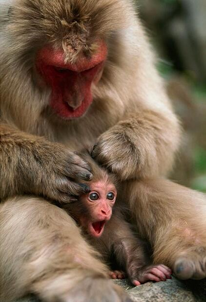 Funny picture of a little monkey getting groomed for the first time! http://t.co/Am8YBhaHTq
