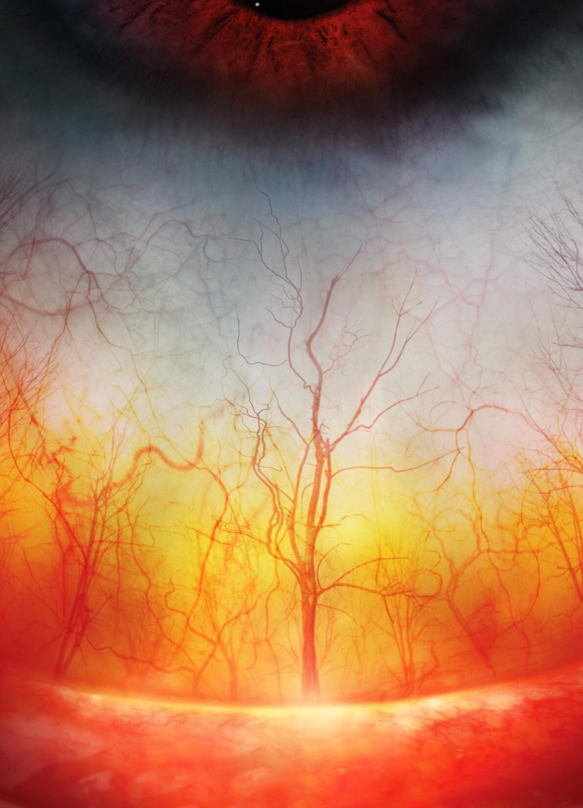 Apparently this is a close-up of the blood vessels in a human eye http://t.co/gQJOrfXIIF