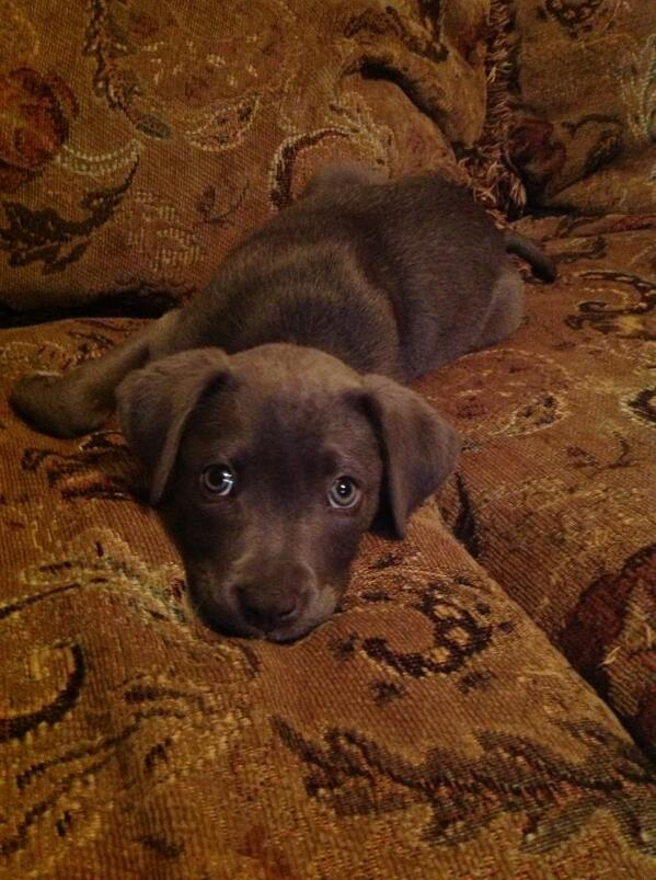 Puppy, on a couch. http://t.co/8mHI3GeuOy