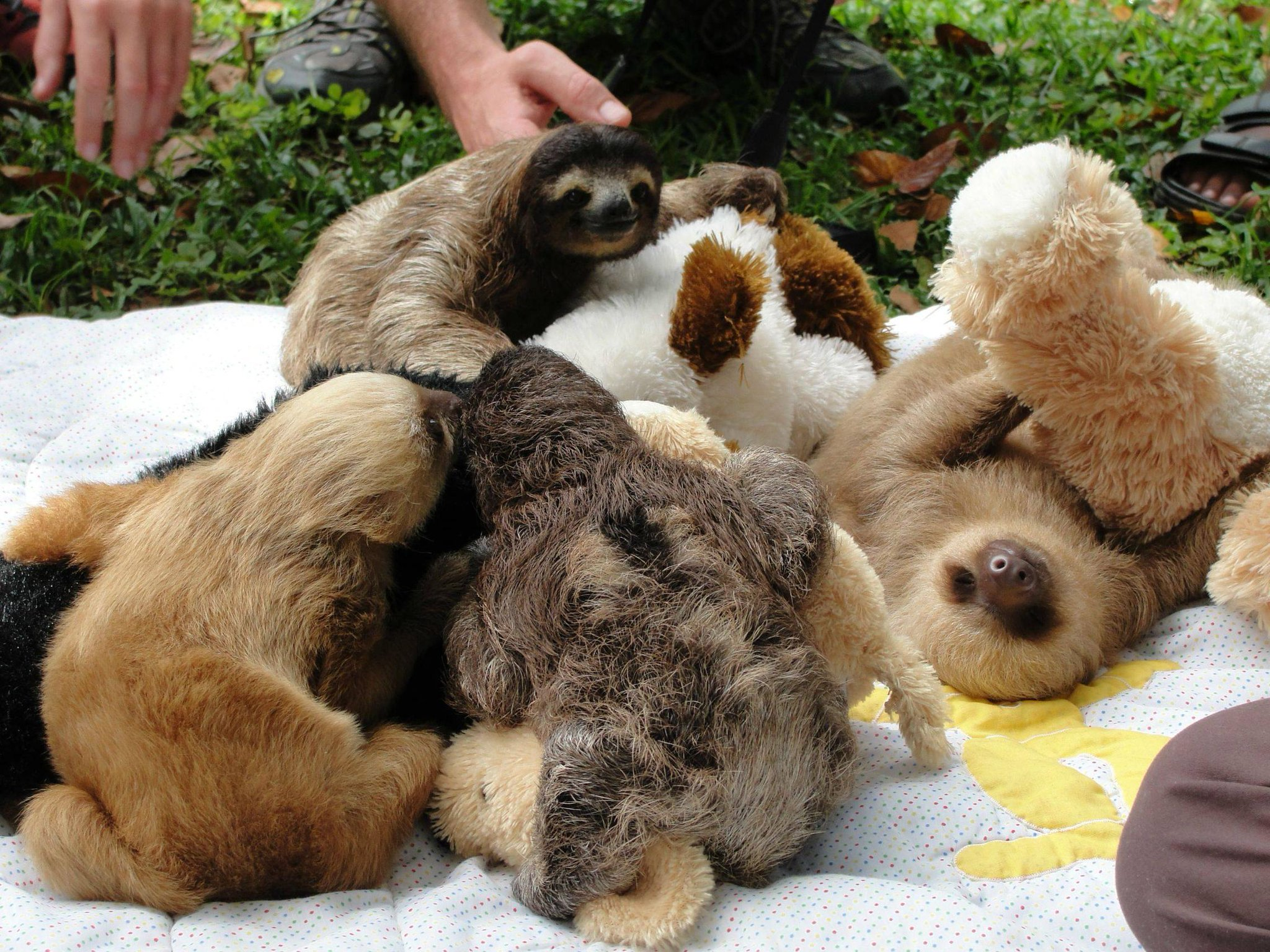 A pile of baby sloths cuddling with teddy bears. http://t.co/sgRXWAZk9t