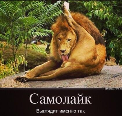 Причиной отставки Пивоварского станет Саакашвили, – эксперт - Цензор.НЕТ 1123