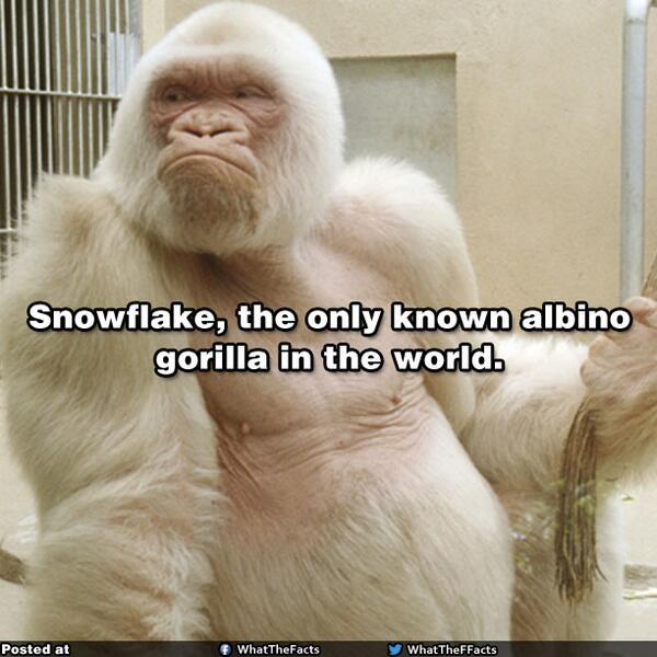 Snowflake....! http://t.co/TkjRnrPq3R