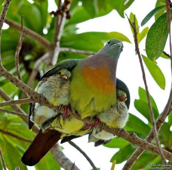 RT @deliajos: Feliz #Miercoles y excelente dia a todos,esta tierna imagen para compartir y como dice @CALACNN : Dios es Amor! http://t.co/BYyyNnO43P
