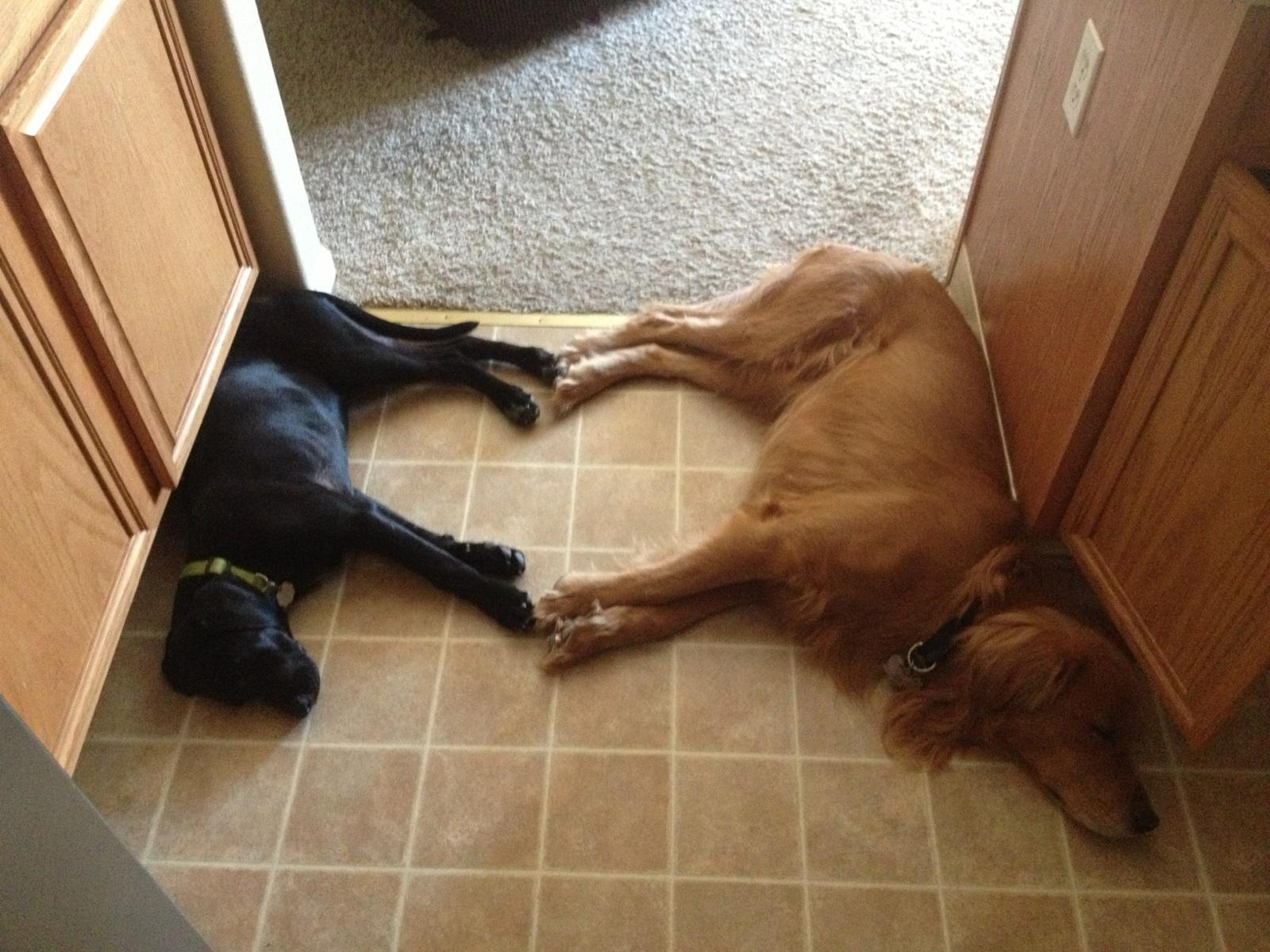 These Sleeping Dogs Formed a <3 Symbol http://t.co/lH4EpxcaVa