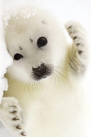 Seal cutie http://t.co/uaMXhvutXa