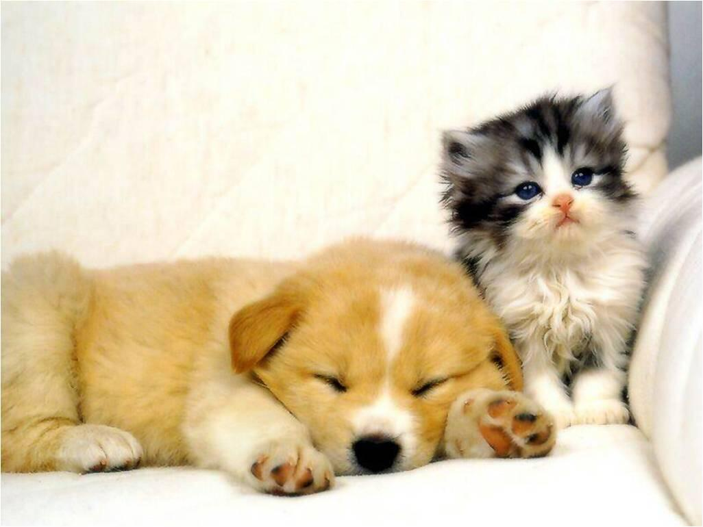 Kitten and puppy, sittin' on a couch. http://t.co/qPAyuMPtdy