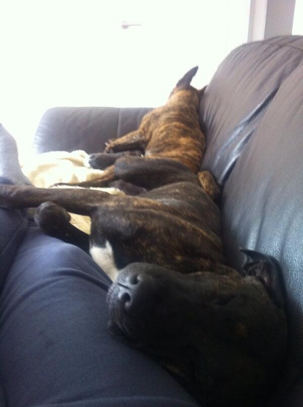 It's a good thing this is a big couch! http://t.co/lLZ2cFb6vf