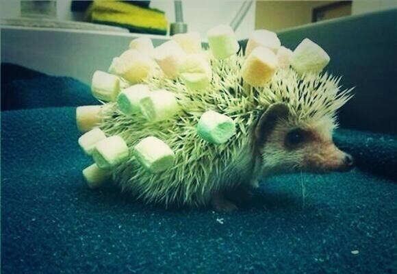@felicityward we never really explored the concept of Marshmallow Holder Hedgehogs. http://t.co/eaTmT0NXtK
