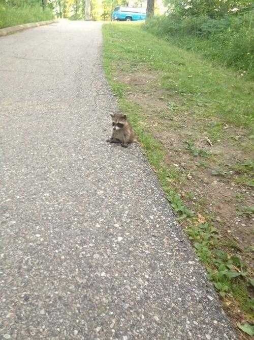 RT @awwclub: Chin up, little buddy. http://t.co/pW00GFnftZ