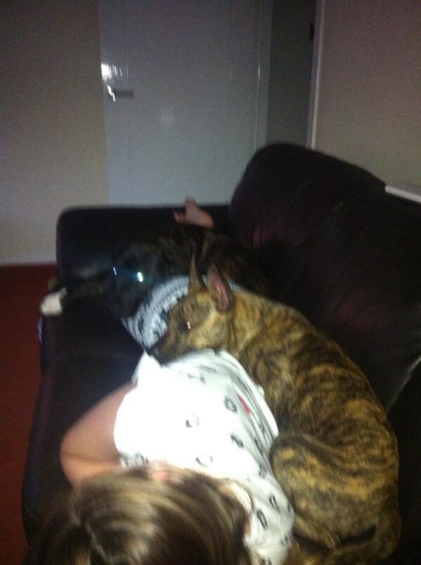 We love Regan. She is comfortable to lie on. http://t.co/bHoOdktjWW