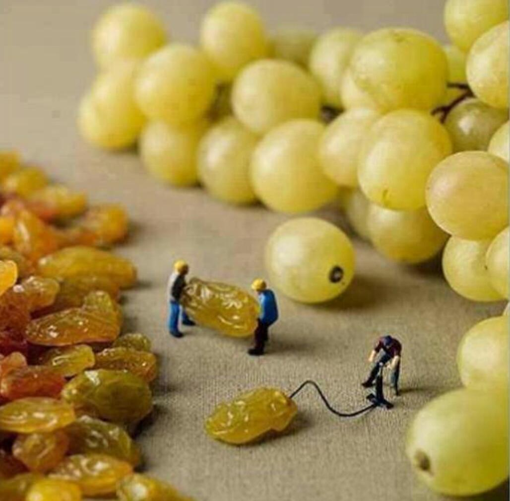 RT @cluedont: How grapes are made. http://t.co/AKILtFGYKF