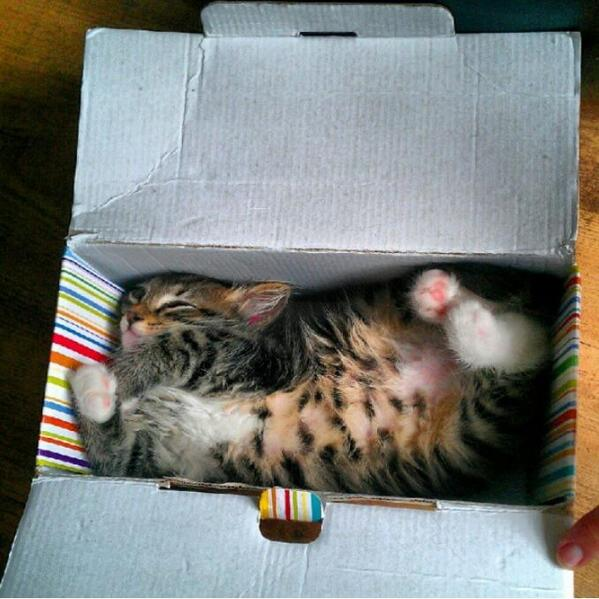 RT @awwclub: I ordered a cat in the mail. http://t.co/fSD964MvlA