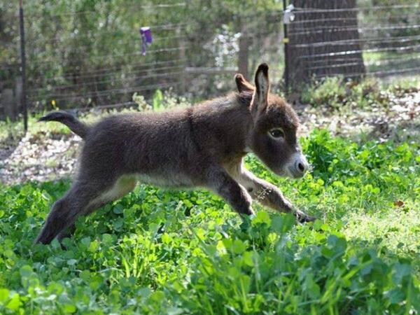 Compartilhe se for a primeira vez que você vê um filhote de burro http://t.co/0VAlLJJ18K