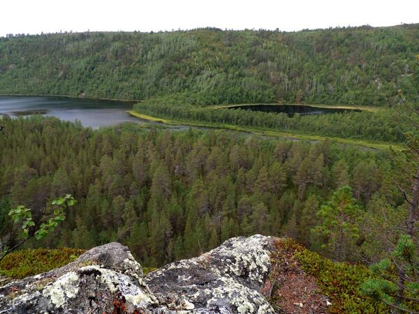 Sampling close to Buvrrasjavri today in Kevo Strict Nature Reserve - stunning forested valley looks primeval #lapland