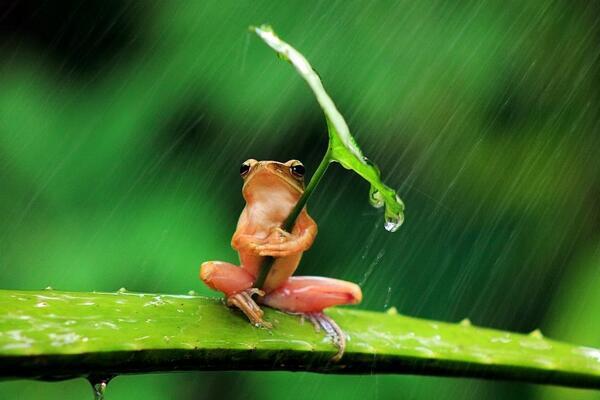 """Rain Rain Go Away"" by Penkdix Palme http://t.co/6lcmxE4s0g"