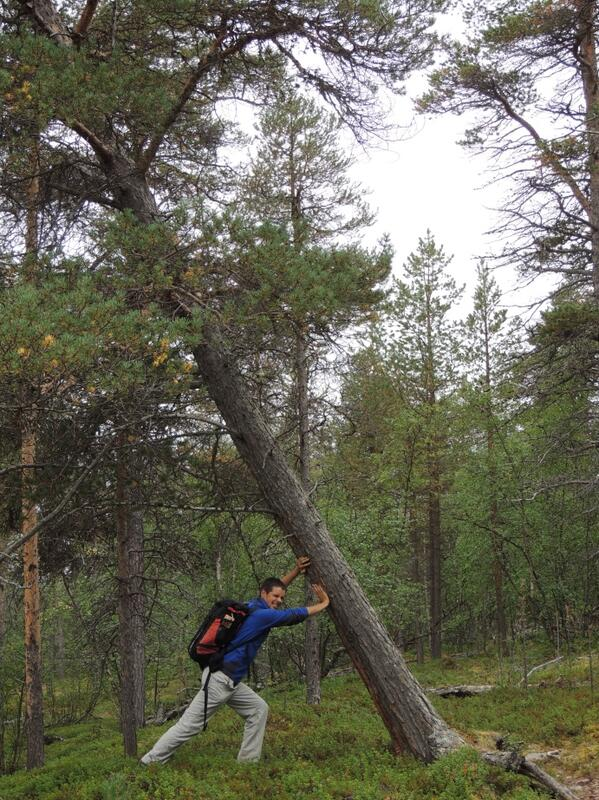 @James_Borrell A hands-on approach to tree conservation #lapland