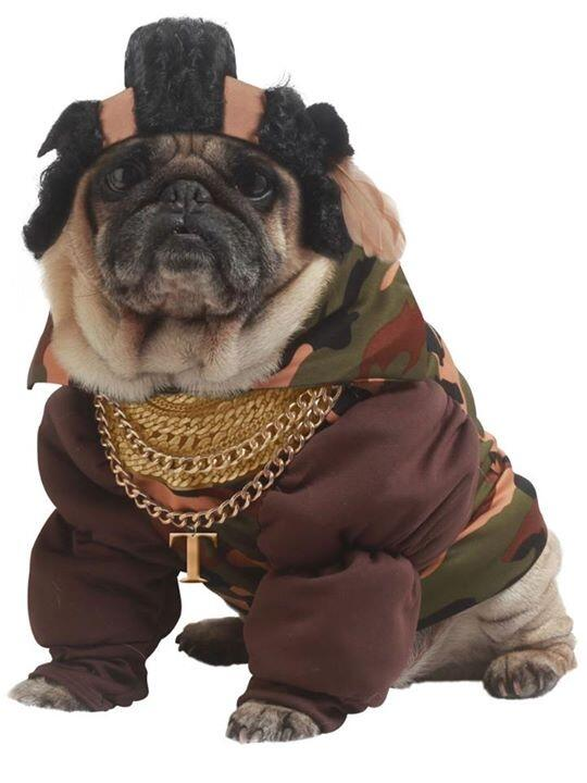 Mr T dog http://t.co/GoXjqC4OXg
