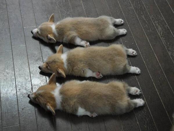 自転車の 熊本市 自転車 処分 : 迷子の犬猫殺処分をゼロに ...