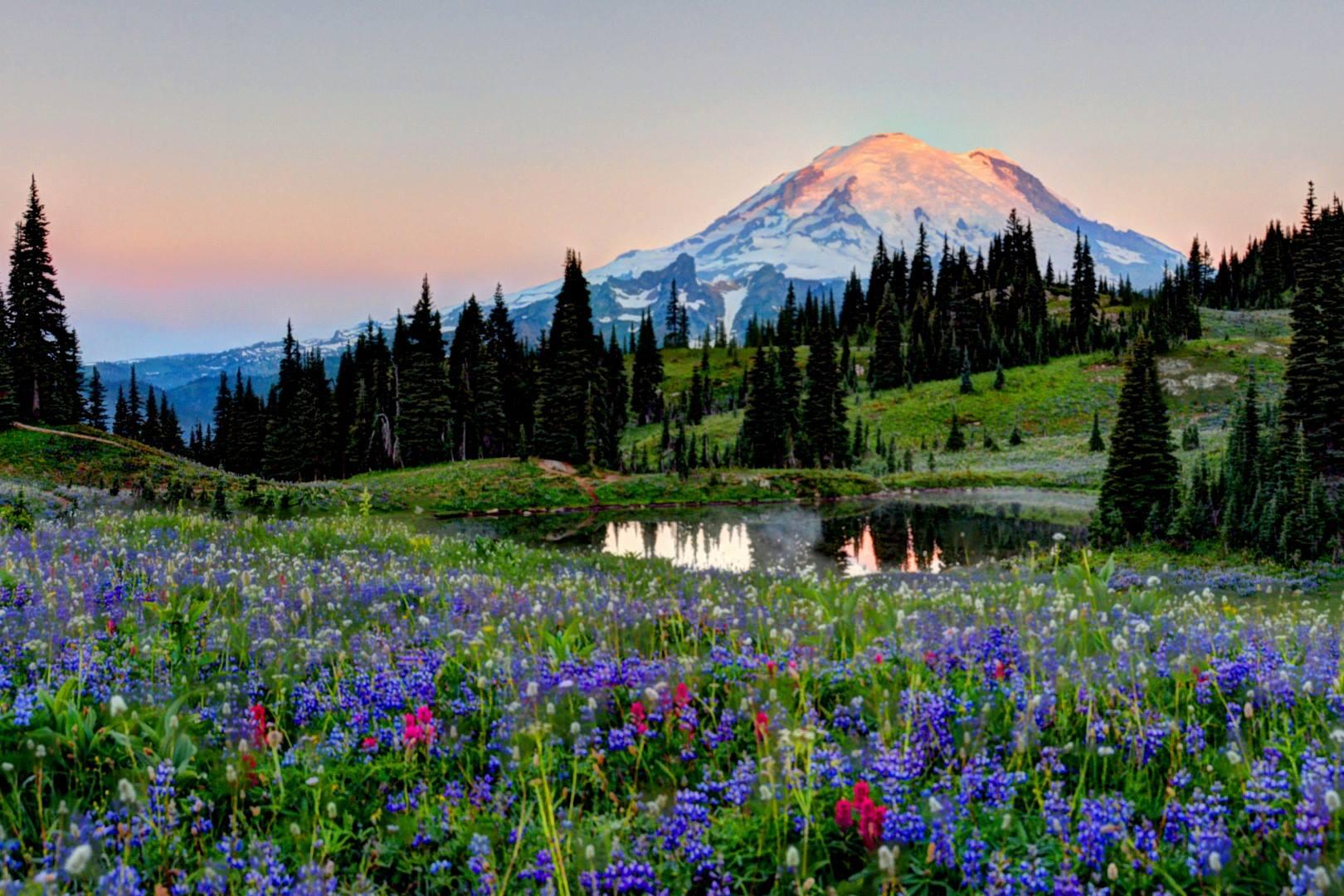 We're wild for this photo of Mt. Rainier w/ the wildflowers at their peak! Credit: Tom Gubala http://t.co/IeGQcWqJEf