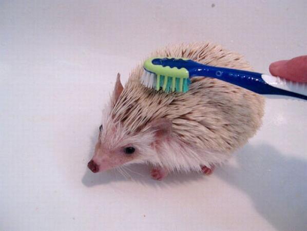 歯ブラシでブラッシングします http://t.co/Dv89fKamvA