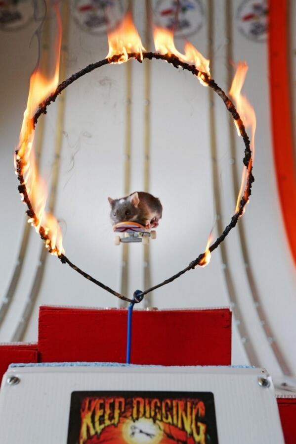 Just a mouse on a skateboard going through a ring of fire. http://t.co/JzZVzpIeMq