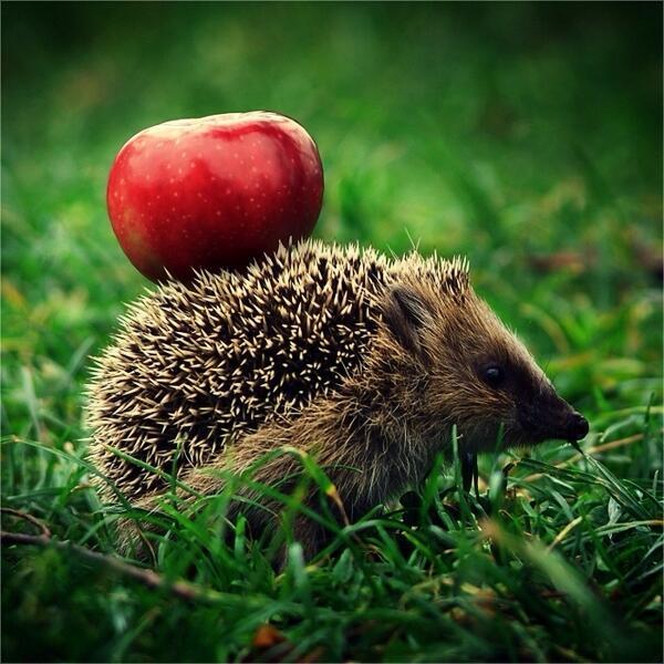 リンゴをかついで http://t.co/r7Ky3GDGvA