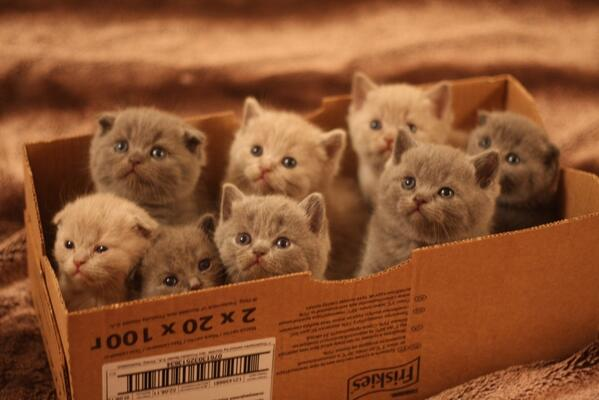 Kittens, in a box. http://t.co/FUnEmQOvwR