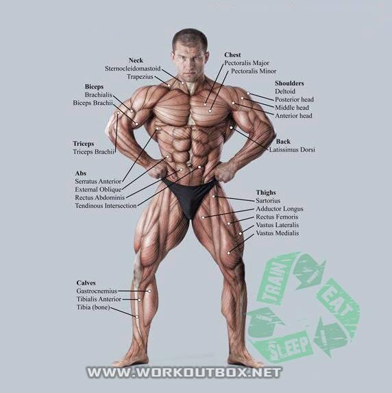 Now U know what muscle U just pulled. http://t.co/6X0B321CE9
