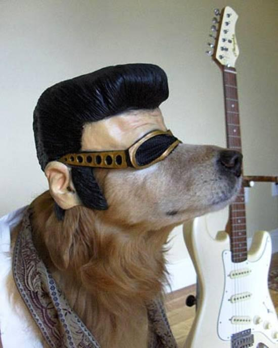 elvis dog http://t.co/wbhlZocdVM
