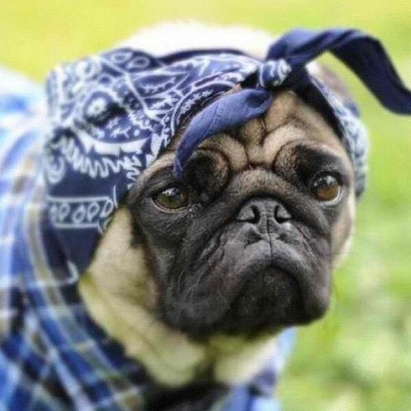 contemplative crips dog http://t.co/VF16lohgqe